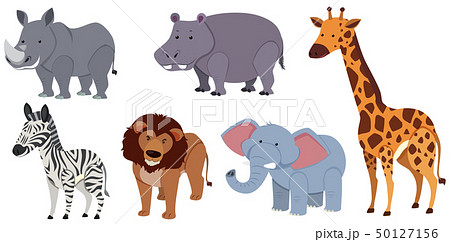 Different kinds of animals on white background 50127156