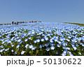 ネモフィラ畑 50130622