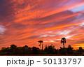 きれい 美しい 野原の写真 50133797
