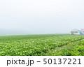 斜里町 畑 濃霧の写真 50137221
