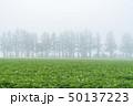 斜里町 畑 濃霧の写真 50137223