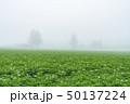 斜里町 畑 濃霧の写真 50137224