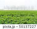 斜里町 風景 畑の写真 50137227