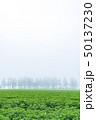 斜里町 畑 濃霧の写真 50137230