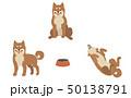 柴犬 動物 犬のイラスト 50138791