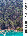 木 ツリー 樹の写真 50139662