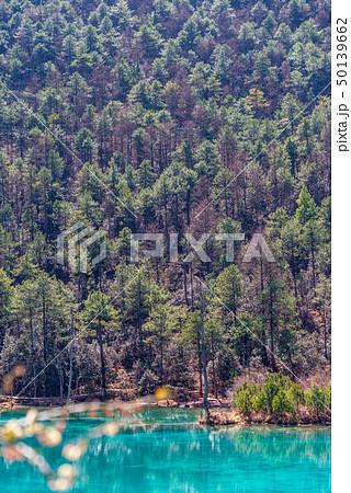 木 ツリー 樹 50139662