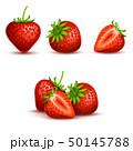 くだもの フルーツ 実のイラスト 50145788