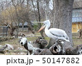 シェーンブルン動物園 50147882