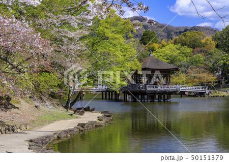 奈良公園 浮御堂 桜 鹿 50151379