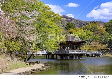 奈良公園 浮御堂 桜 鹿 50151382