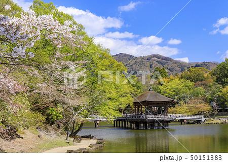 奈良公園 浮御堂 桜 鹿 50151383