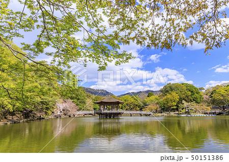奈良公園 浮御堂 桜 鹿 50151386