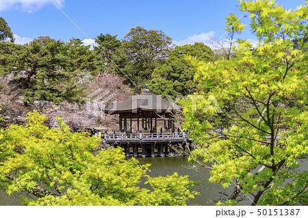 奈良公園 浮御堂 桜 鹿 50151387