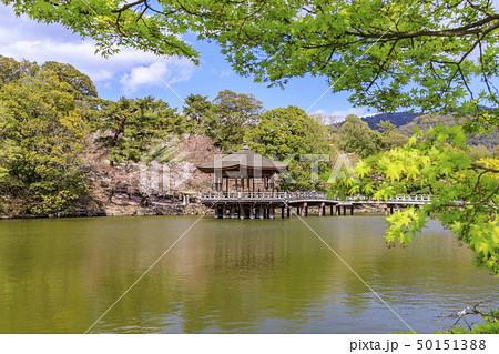 奈良公園 浮御堂 桜 鹿 50151388