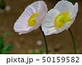 花 はな ハナの写真 50159582