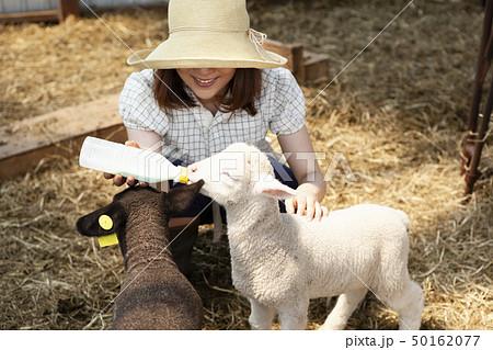 子ヒツジにミルクを与える女性 50162077