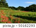 日本 稲 米の写真 50162293