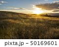 ニュージーランドの大自然 夕暮れ 50169601