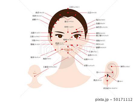 美容鍼灸・エステ 顔と耳のツボ(ふりがな有り) 50171112