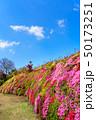松本ツツジ園 ツツジ 日本の写真 50173251