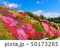 日本 花 きれいの写真 50173265