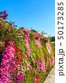 日本 花 きれいの写真 50173285