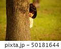 隠れる女の子 50181644