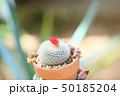 花 サボテン コピースペースの写真 50185204