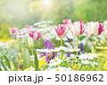 春の花 花壇 50186962
