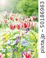 春の花 花壇 50186963