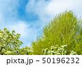 新緑の木と青空 50196232