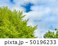 新緑の木と青空 50196233