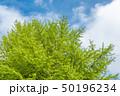 新緑の木と青空 50196234