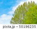 新緑の木と青空 50196235