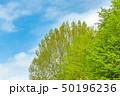 新緑の木と青空 50196236