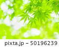 新緑の葉 50196239