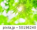 新緑の葉 50196240