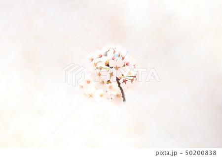 桜 ソメイヨシノ 春 イメージ 50200838