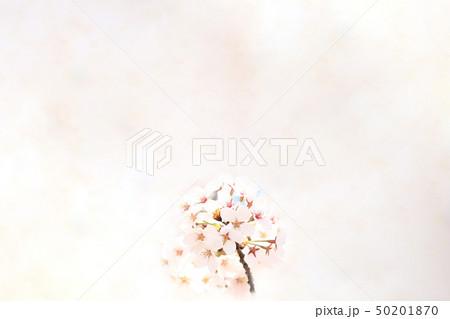 桜 ソメイヨシノ 春 イメージ 50201870