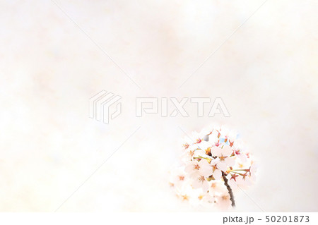 桜 ソメイヨシノ 春 イメージ 50201873