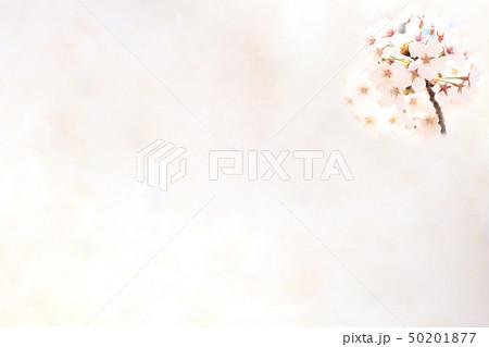 桜 ソメイヨシノ 春 イメージ 50201877