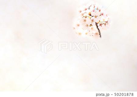 桜 ソメイヨシノ 春 イメージ 50201878