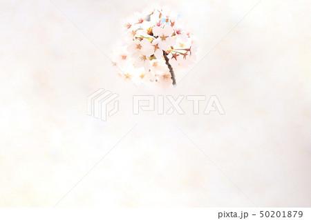 桜 ソメイヨシノ 春 イメージ 50201879