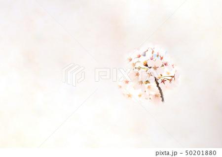 桜 ソメイヨシノ 春 イメージ 50201880