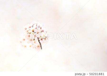 桜 ソメイヨシノ 春 イメージ 50201881