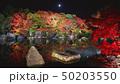 夜の好古園の紅葉 50203550