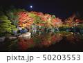 夜の好古園の紅葉 50203553