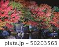 夜の好古園の紅葉 50203563