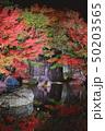 夜の好古園の紅葉 50203565